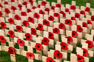-absolutely_free_photos-original_photos-remembrance-day-5000x3333_12593