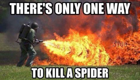 kill-a-spider